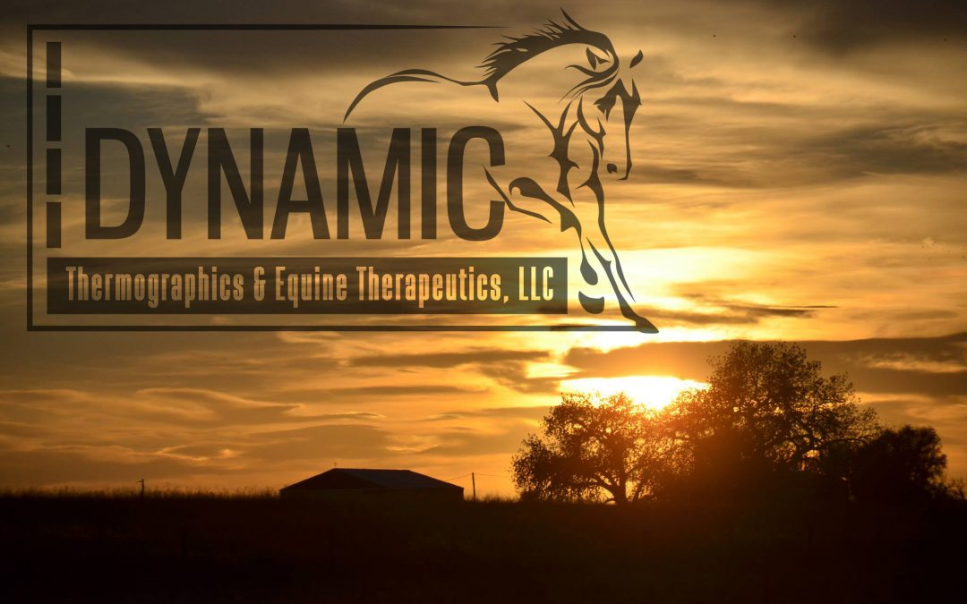 Dynamic Equine Therapeutics Horse Therapy Logo by EQ Graphics Veterinary Medical Logos